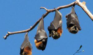 Murciélagos en la ciudad